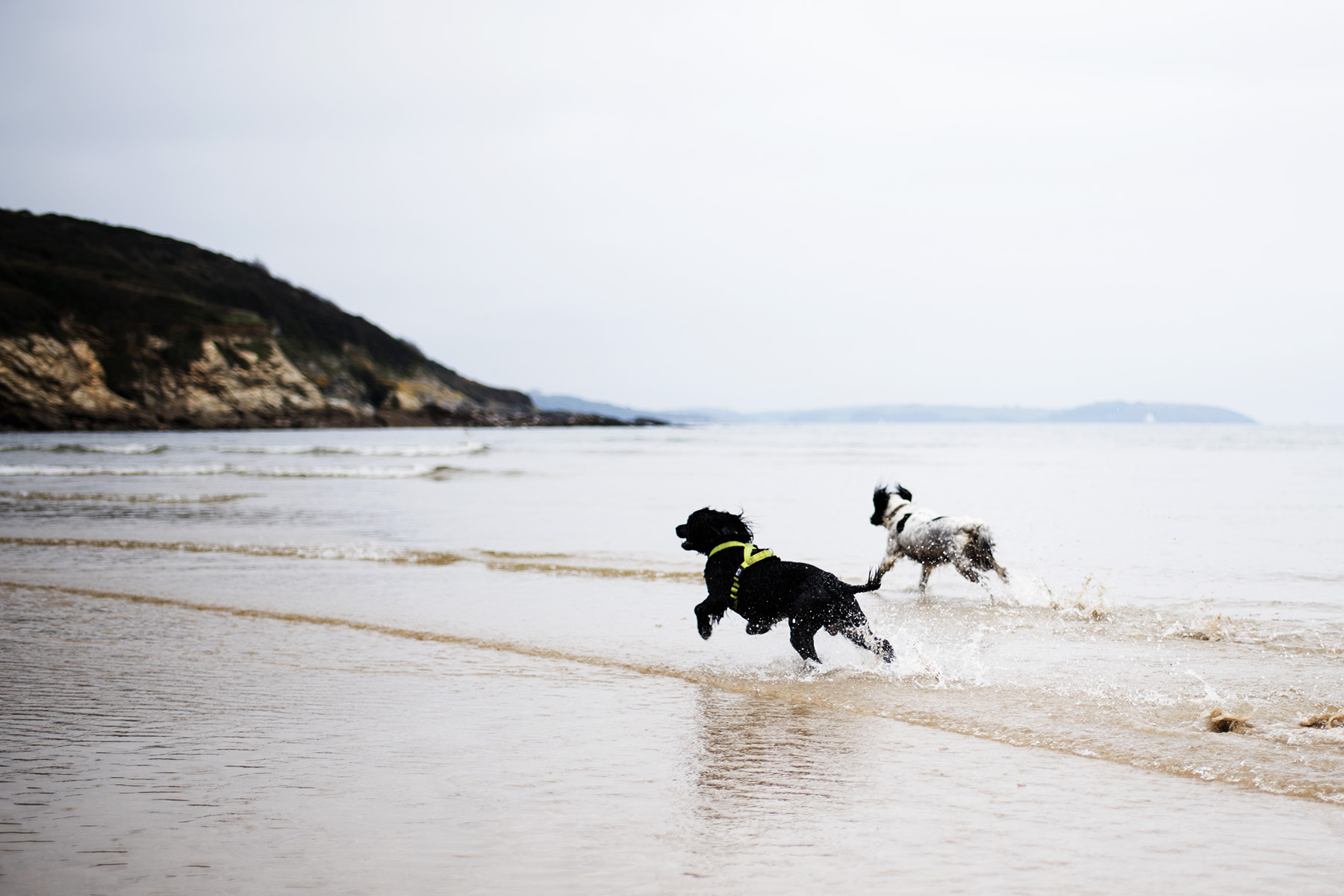 Woody and Millie | The Cornish Dog