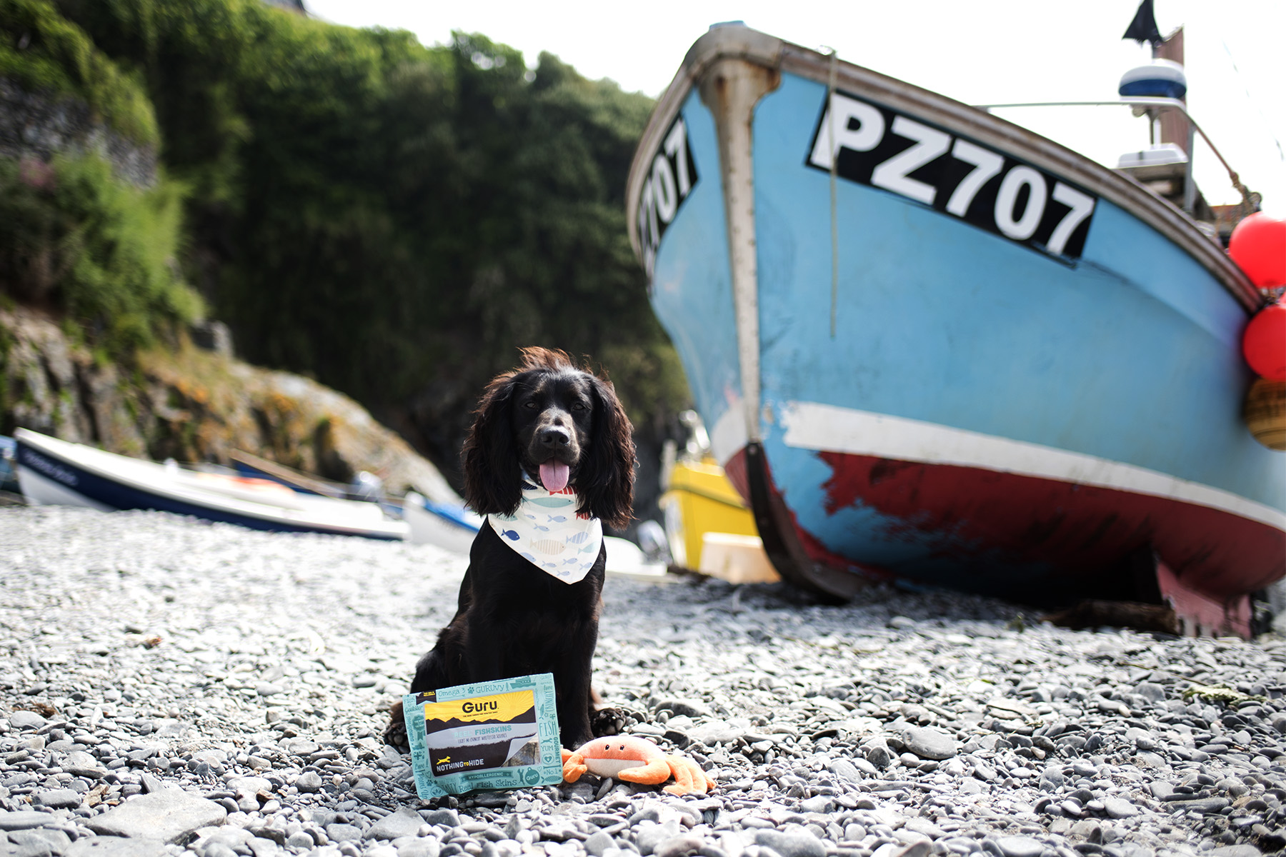 Guru Pet Food | The Cornish Dog