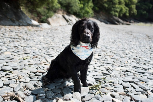 Summer Dog Walking Essentials | The Cornish Dog
