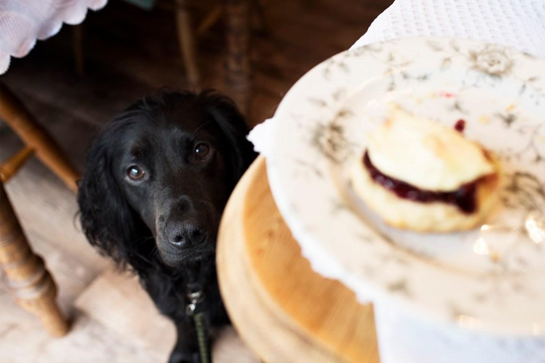 Teacup Tearoom | The Cornish Dog