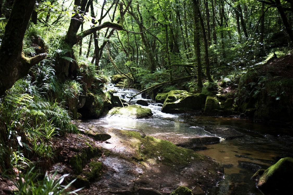 Golitha Falls | The Cornish Dog