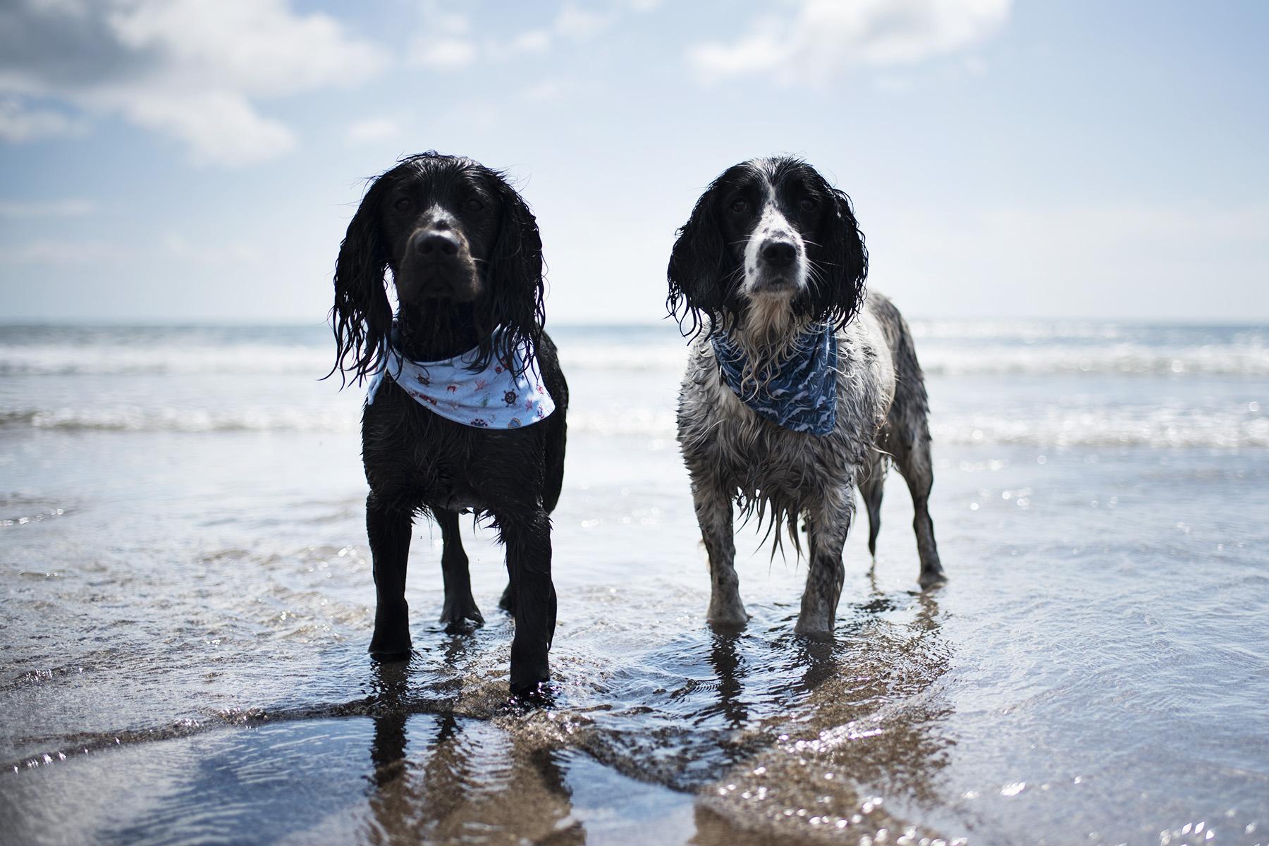 Kennack Sands | The Cornish Dog
