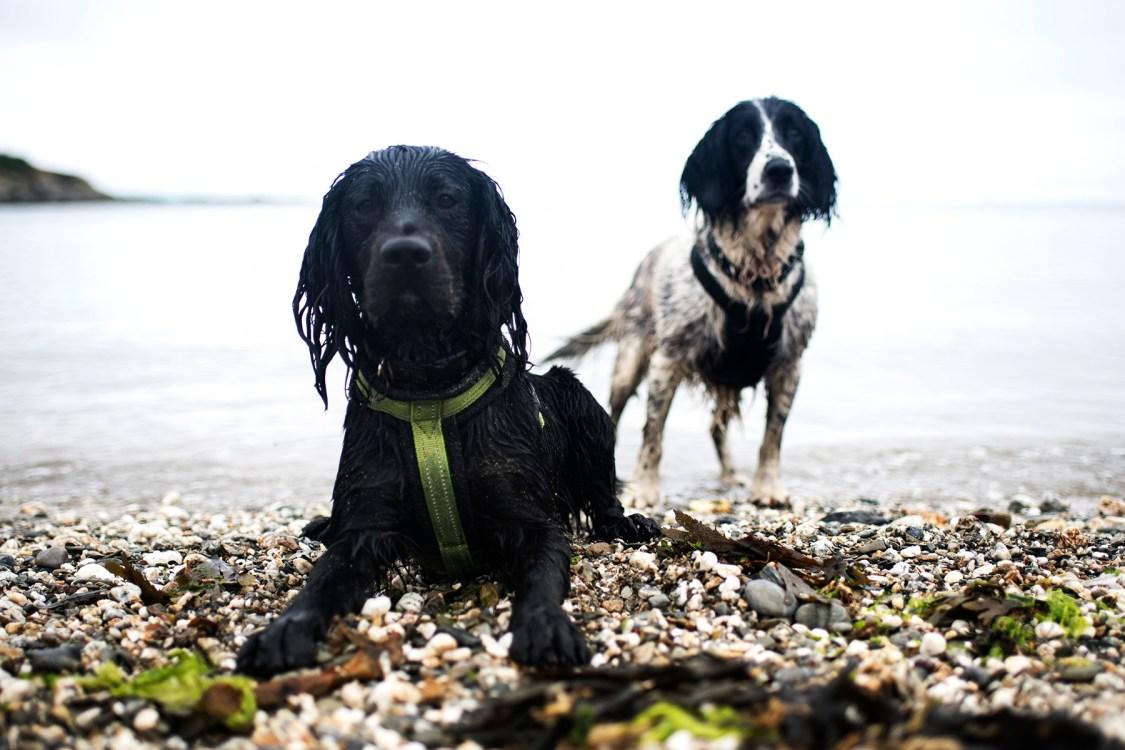 Gorran Haven to Mevagissey | The Cornish Dog