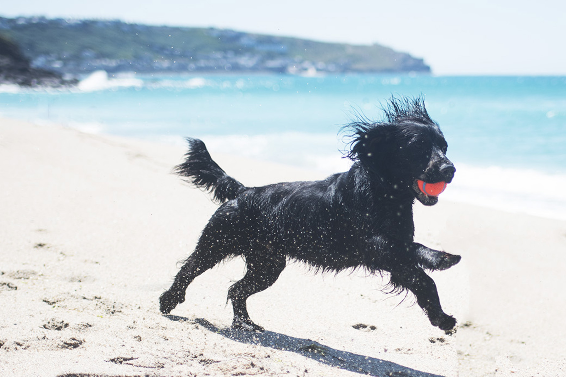 How Much Does it Cost to Own a Dog? | The Cornish Dog