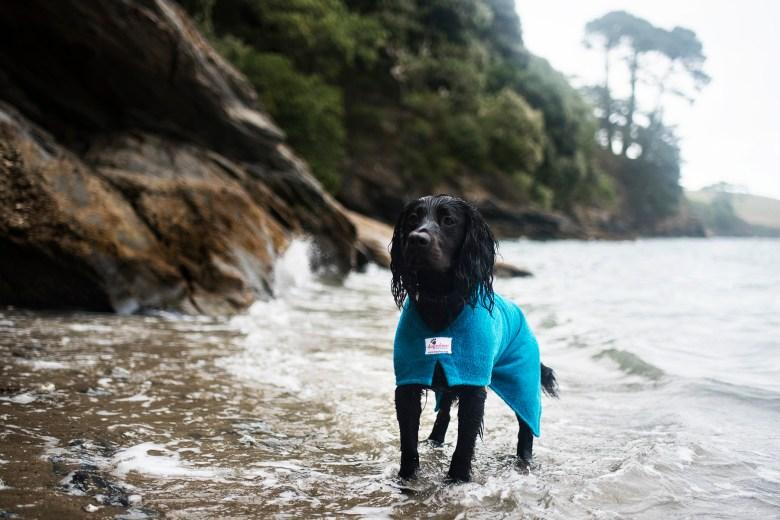 Dogrobes   Drying Coat for Your Dog   The Cornish Dog