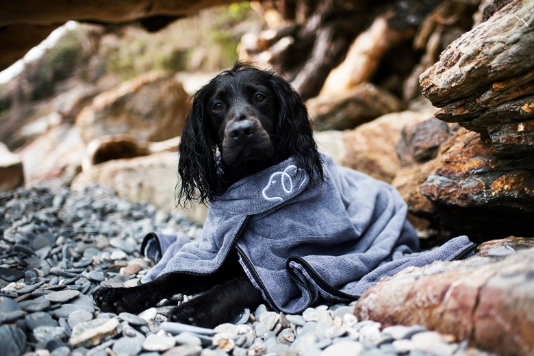 Paws and Presto Drying Device   Drying Coat for Your Dog   The Cornish Dog