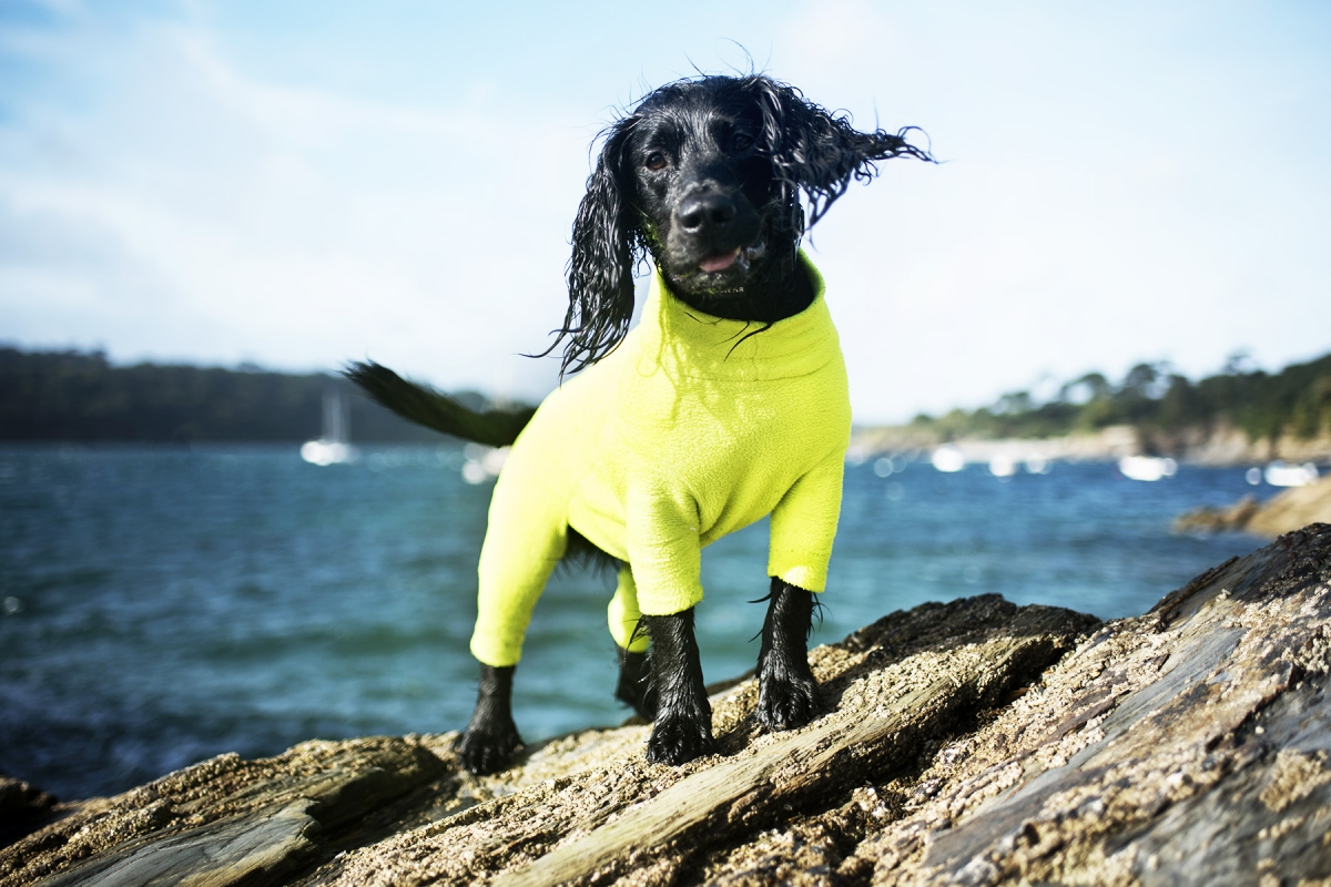 Choosing a Drying Coat for Your Dog | The Cornish Dog