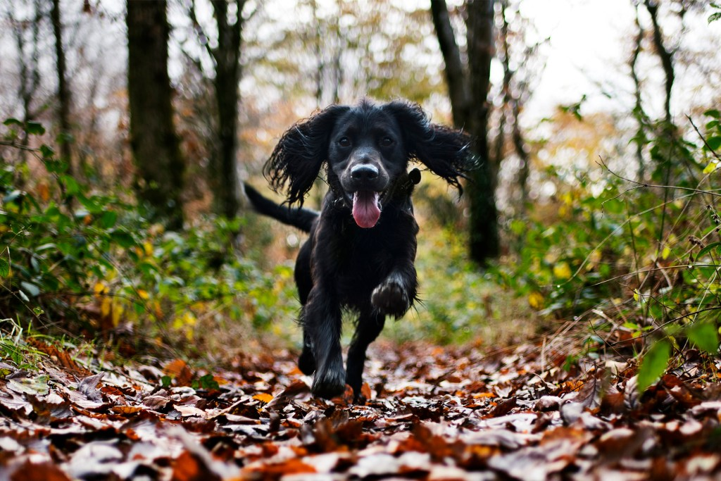 Idless Woods in Autumn | Woody's Walks