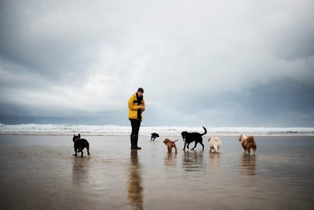 A Dog Friendly Beach Clean with Cornish Creatives   The Cornish Dog
