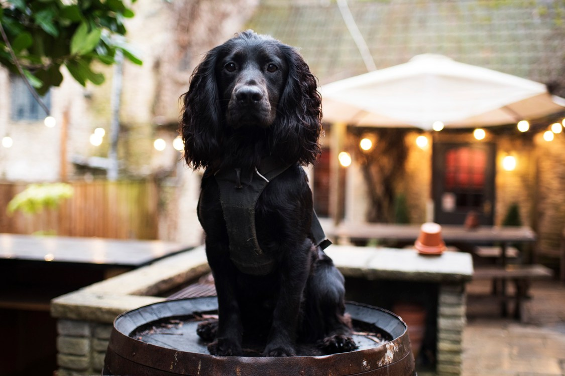 A Dog Friendly Trip to The Cotswolds | The Cornish Dog
