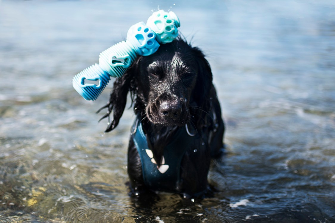 Multi Purpose Dog Products | The Cornish Dog
