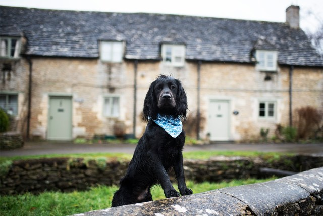 Visit Wiltshire | The Cornish Dog