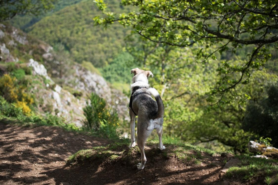 Teign Gorge | The Cornish Dog