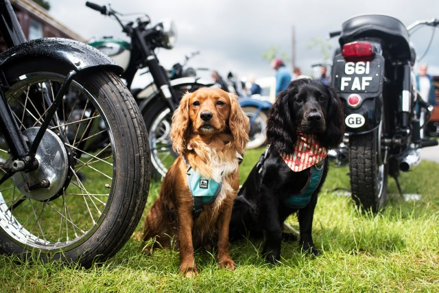 Woody and Hen by the Vintage Motorbikes | The Cornish Dog