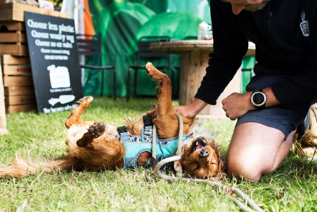 Hen Getting All The Fuss at the Royal Cornwall Show   The Cornish Dog