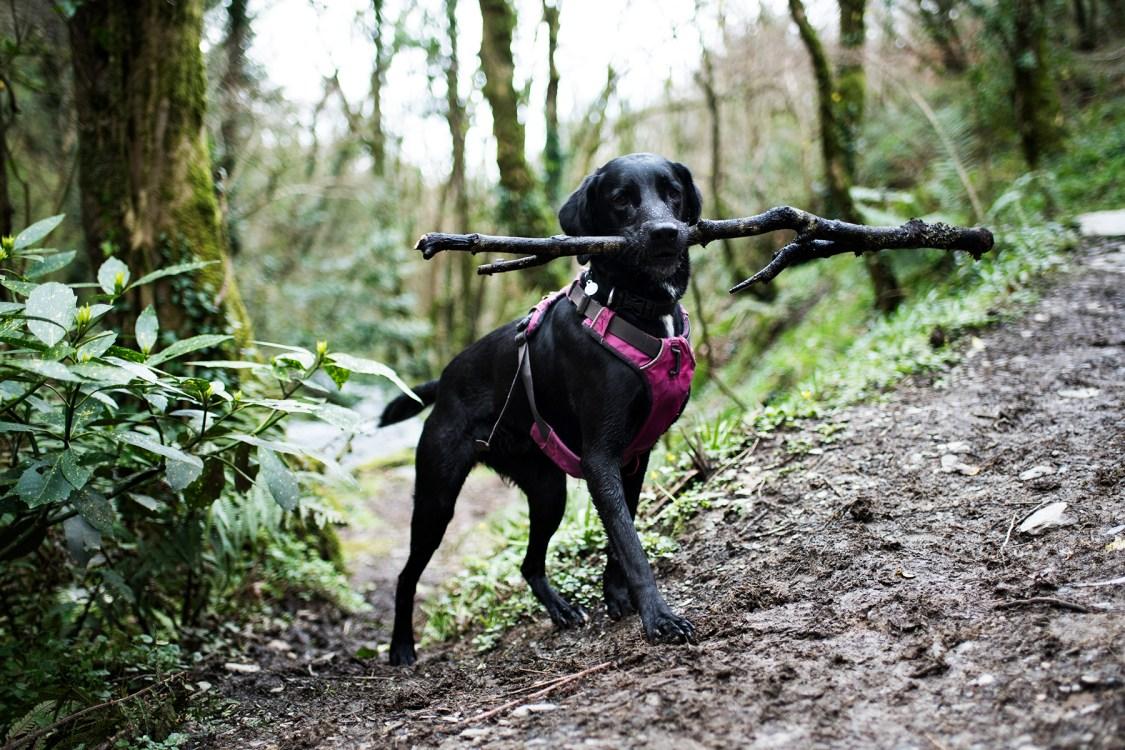Ruffwear Front Range   The Cornish Dog
