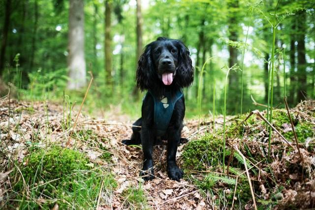 Hurtta Active Harness   The Cornish Dog