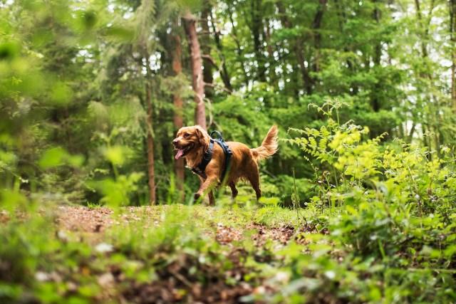 Hurtta Active   The Cornish Dog