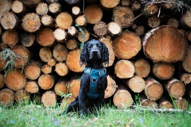 Embark Adventure Harness   The Cornish Dog