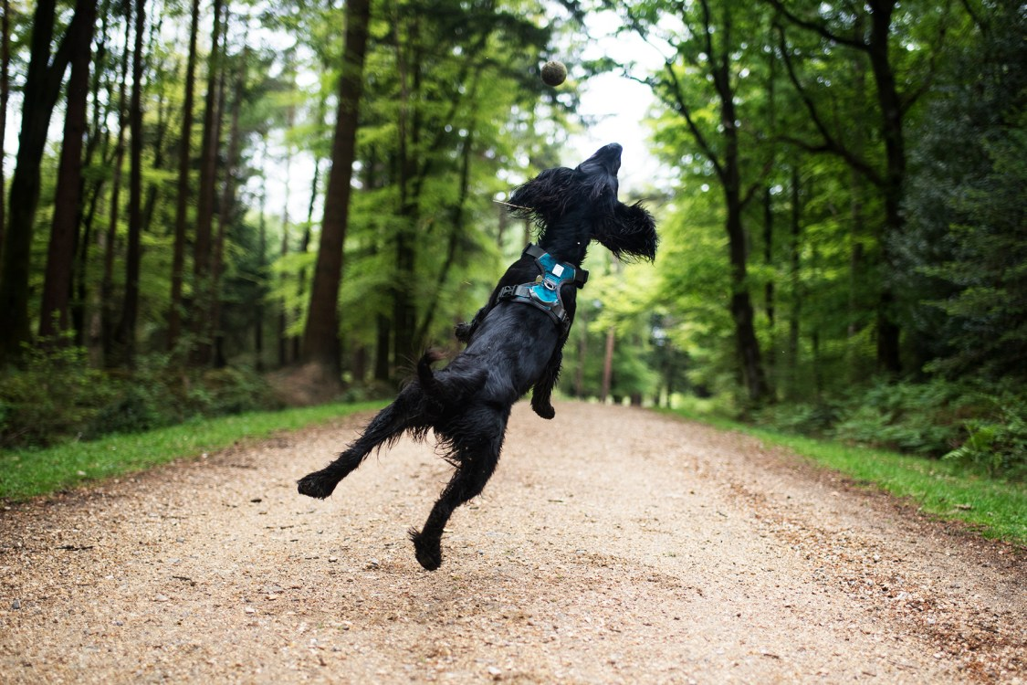 Embark Adventure   The Cornish Dog