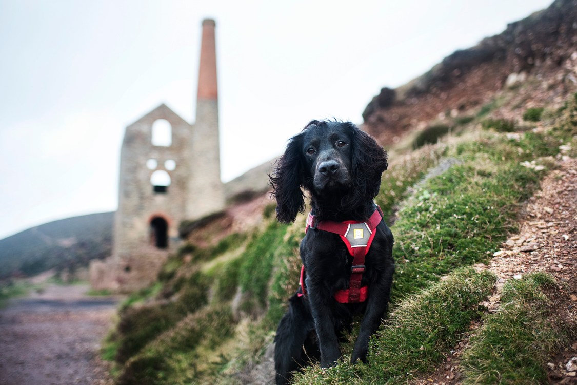 Ruffwear Webmaster | The Cornish Dog