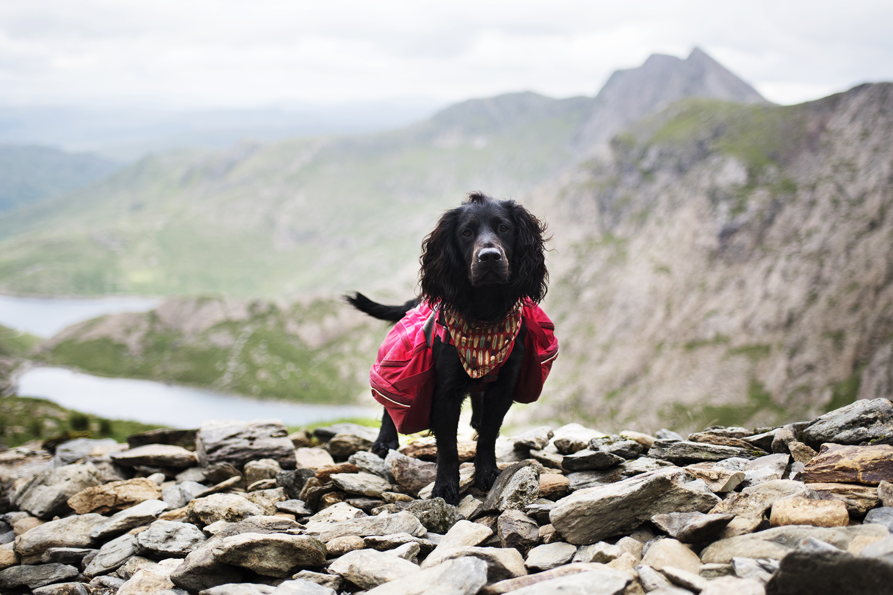 Nearly at the Top of Snowdon | The Cornish Dog