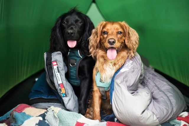 Wild Camping with Dogs in Boscastle   The Cornish Dog