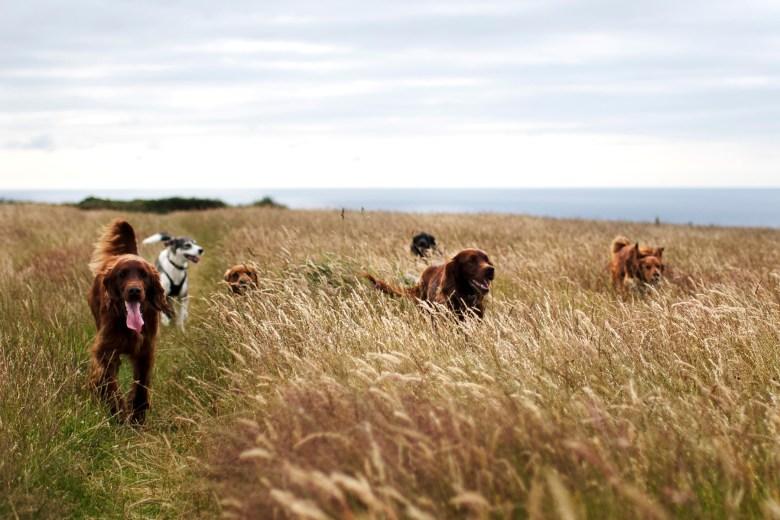 North Cornwall Dog Walking   The Cornish Dog