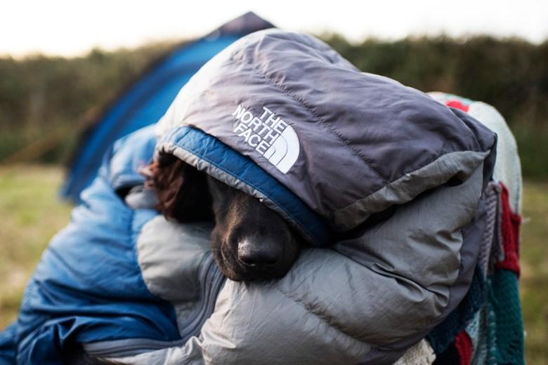 We'll be Camping Along the Way | The Cornish Dog