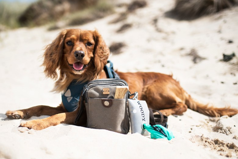 Hen with our Dog Walking Bag   The Cornish Dog