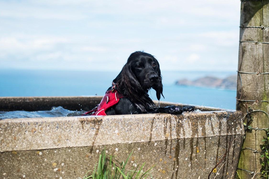 Woody's Swimming Pool - The Cornish Dog