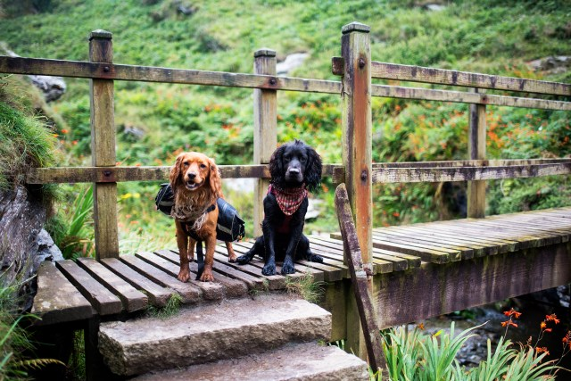 The Cornish Coast Path - The Cornish Dog