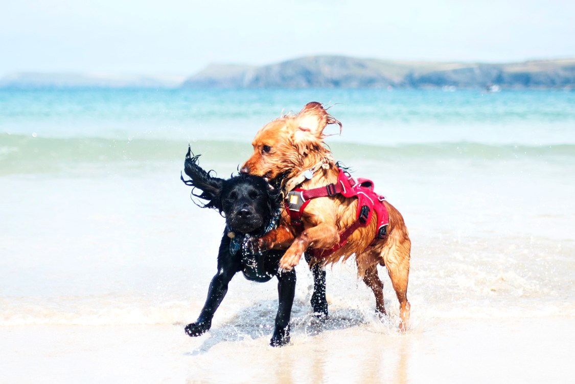 One of our Many Beach Breaks | The Cornish Dog