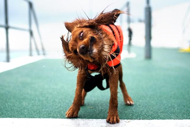 Shake It Off Hen | The Cornish Dog