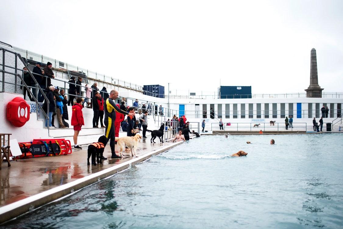 Dog Day at Jubilee Pool | The Cornish Dog