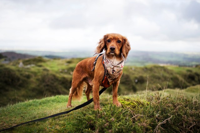 Cheesewring and The Hurlers Stone Circles | The Cornish Dog