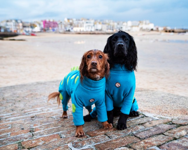 Things To Do in Dog Friendly St Ives