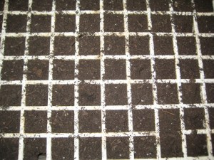 Seed trays with soil