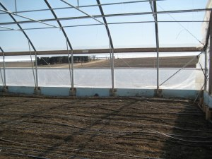 The old hoop house
