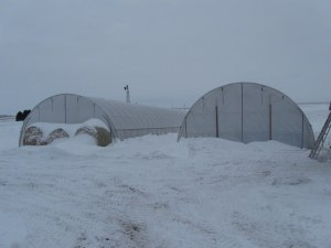 High tunnels in winter
