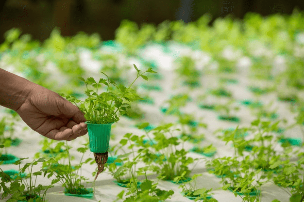 Vertical-Farming-could-help-solve-the-Food-Supply-Chain-Problem