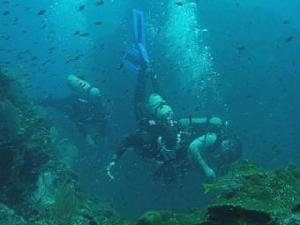13_Diving_at_Aguila_de_Osa_340x255