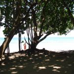 cahuita-national-park-2