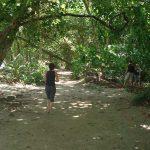 cahuita-national-park-4
