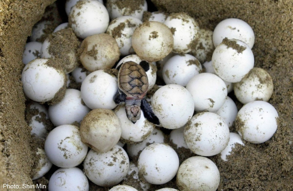 Help Preserve Endangered Turtle Eggs In Costa Rica