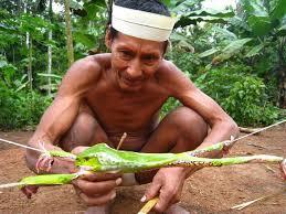 Kambo Medicine
