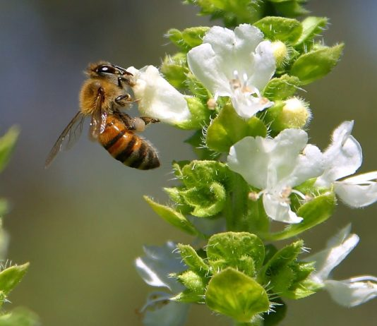 Bee Beekeepers Mexiko