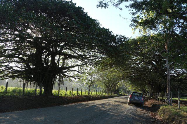 Osa Peninsula Road Way