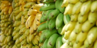 bananas costa rica
