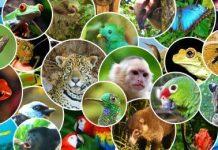 COSTA RICA CELEBRATES THE WORLD'S MOST ADVANCED ANIMAL DEFENCE LAW